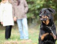 Adopter un chien ne s'improvise pas