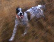 Votre chien peut-il vous accompagner au footing ?