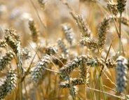 Menus santé : des céréales à tous les repas ?