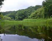 Deux ans après Fukushima, la forêt contaminée 'à vie'?
