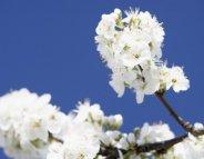 Allergiques ? Profitez de la belle saison