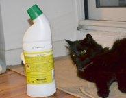 Accidents domestiques : les animaux aussi !