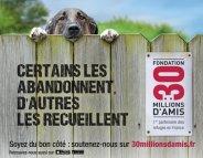 Un refuge, une nouvelle chance pour les animaux abandonnés