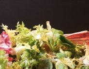 Menus Santé : les salades, vertes de plaisir