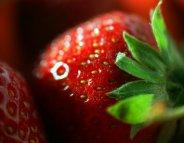 Des perturbateurs endocriniens dans les fraises ?
