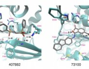 Mucoviscidose : deux cibles contre la mutation la plus fréquente