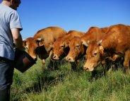 Suicide chez les agriculteurs ? La preuve par les chiffres