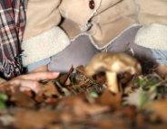Forte augmentation des intoxications aux champignons en France