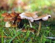 Les champignons sont de sortie… la prudence aussi