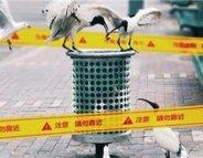 Grippe aviaire : A/H6N1, un nouveau venu chez l'Homme