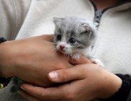 Avant d'adopter un chat, vraies questions et bons conseils