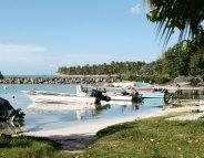 Antilles : le chikungunya, parti pour durer