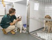 Vétérinaires et médecins : main dans la main pour défendre la Santé publique