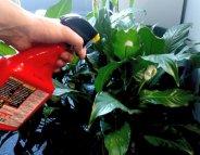 L'ANSES enquête sur les pesticides à domicile