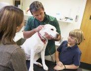 Comment choisir son vétérinaire ?