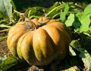 Menus santé : tout l'automne dans une soupe
