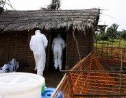 Ebola: quel bilan après un an d'épidémie ?