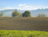 Ambroisie : la plante allergisante qui explose