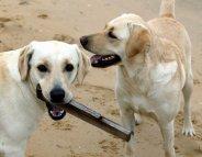 Mon chien à la plage : les règles à respecter