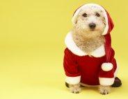 Noël : la fête en toute sécurité pour chiens et chats