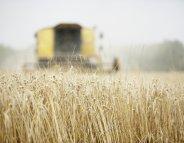 COP21 : le changement climatique, une menace pour l'agriculture