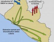 Ebola : le parcours du virus au cours de l'épidémie