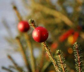 Les cadeaux du Père-Noël, la bûche au chocolat et les réveillons en famille  ou entre amis. Les fêtes de fin d année sont synonymes de bonheur, de  plaisir et ... fec58a20cfc