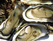 Repas de fête : la gourmandise n'exclut pas le bon sens