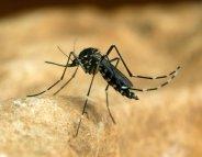 Virus Zika : informer les femmes enceintes
