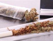 Le cannabis, une méthode de sevrage tabagique ?