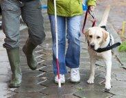 Lieux publics: les chiens guides d'aveugles n'ont pas à montrer patte blanche