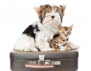 Animaux de compagnie : Petit guide pour vacances pas bêtes !