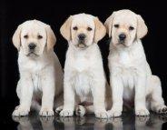 Pour protéger votre famille, traitez vos animaux de compagnie contre les parasites