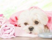 Mission hygiène pour nos animaux de compagnie