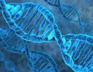 ADN : le processus de réparation se dévoile