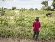 Vaccin antipaludique : l'OMS donne son feu vert pour une utilisation en Afrique