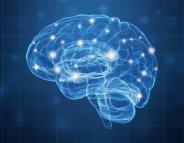 Les neurones de la reproduction ont leurs petits secrets
