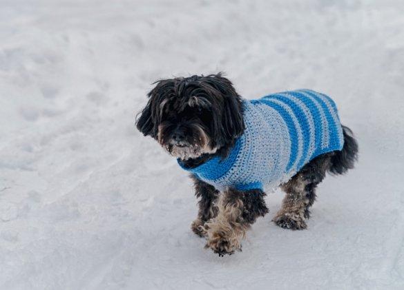 Vague de froid : protégez vos animaux de compagnie
