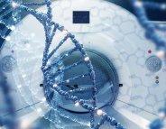 Déficience intellectuelle : un nouveau gène impliqué
