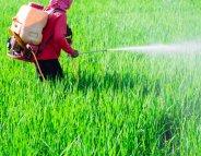 Pesticides : Ségolène Royal annonce de nouvelles mesures