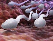 Cancer : l'anti-infectieux prévient-il l'infertilité ?