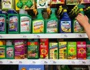 Glyphosate : son caractère cancérogène remis en question