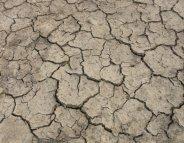 Contre la famine, l'urgence absolue