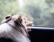 Vacances : en voiture, prenez soin de votre animal