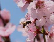 Piqûres d'insectes : comment réagir ?