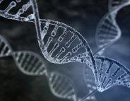 Obésité : des gènes spécifiques dans la population africaine ?