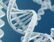 Déficience intellectuelle : 26 nouveaux gènes au compteur !
