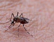 Paludisme : renforcer les mesures de prévention