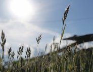 Pollens : alerte rouge dans 3 départements du sud