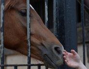 L'équitation contre les dommages de l'AVC